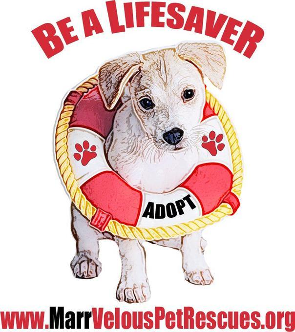 MarrVelous Pet Rescue