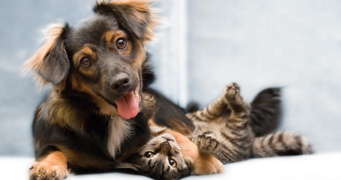 MarrVelous Pet Rescues